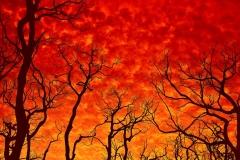 Burnt _ 6478