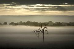 Whiteman Sunrise & Tree.