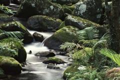 Tropical Stream _ 25