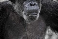 Singapore Zoo & Jurong 61