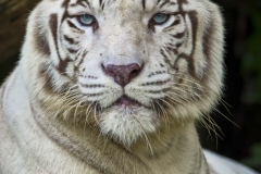 Singapore Zoo & Jurong 66