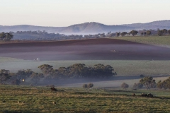 Toodyay Morning _0342