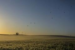 Hot Air Balloons at Sunrise_Panorama 6A