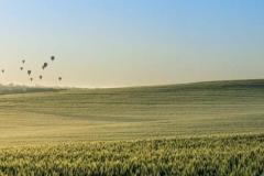 Hot Air Balloons_Panorama1
